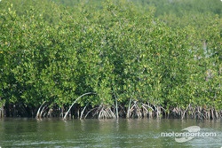 Mangrove swamp in Key Largo
