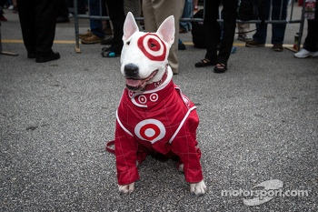 Bullseye the Target dog