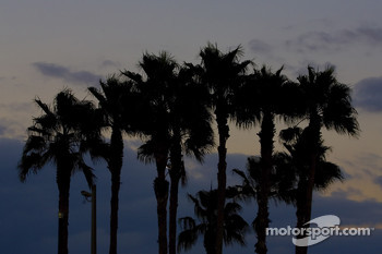 Palm Trees at Homestead-Miami Speedway
