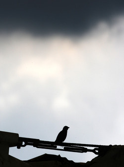 A bird with storm clouds above