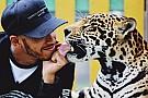 Ativista critica Hamilton por fotos com animais selvagens