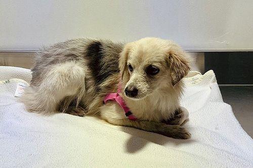 Circuito do Bahrein resgata cadela que interrompeu treino da F1
