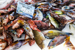 Fish on a market stall in Sanary sur Mer