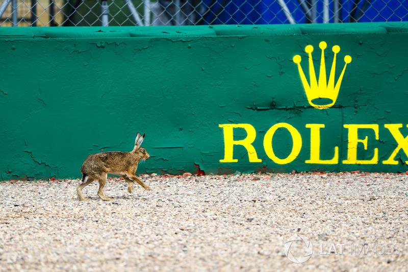 Заяц на трассе