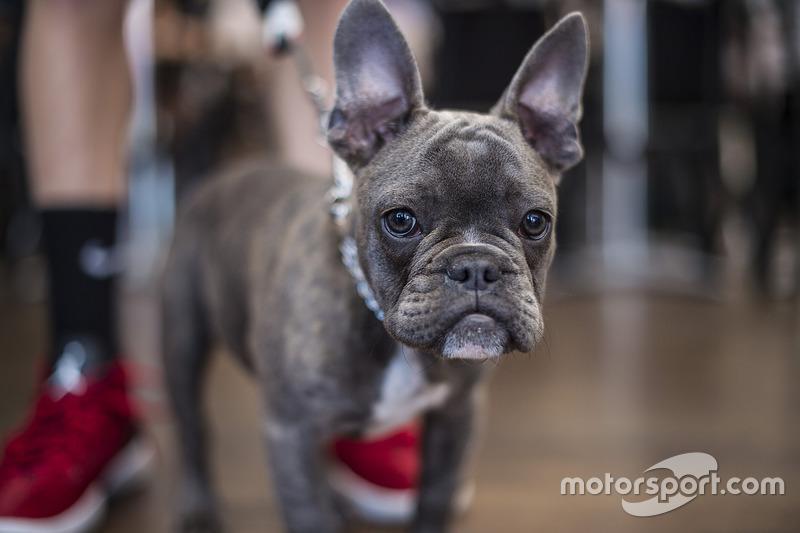 Jack Miller, Estrella Galicia 0,0 Marc VDS, dog