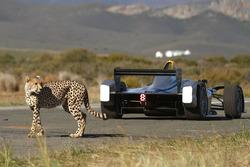 Un ghepardo con una monoposto di Formula E