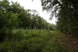 Il percorso del vecchio circuito dove ora sono stati ripiantati degli alberi