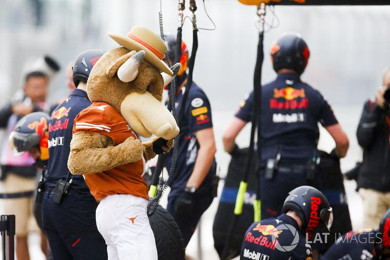 Талисман футбольной команды «Техасские быки»