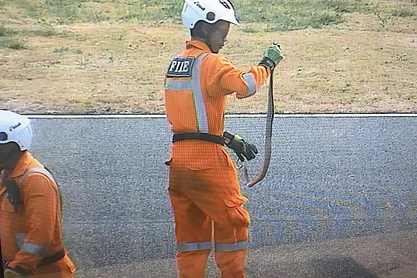 MotoGP Новость Во время тестов MotoGP в Таиланде на трассу выползла змея