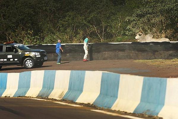 Stock Car Brasil Después de los niños y perros, los Stock reciben la visita de bueyes