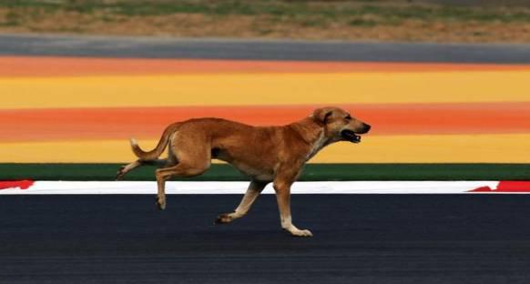 Piste giren köpek Senna'yı kızdırdı