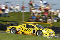 #8 G&W Motorsports BMW Picchio DP2: Darren Law, Guy Cosmo