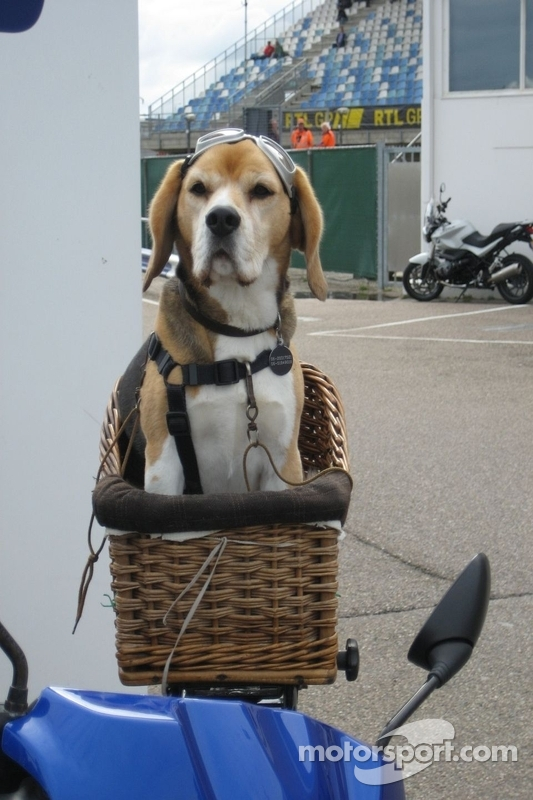Racing dog