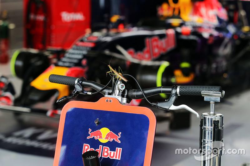 Una mantis religiosa se une a la Red Bull Racing en el pit