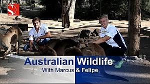 Fauna australiana – Melbourne, Australia – Sauber F1 Team