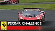 Ferrari Challenge Europe - Silverstone 2018, Coppa Shell race 2